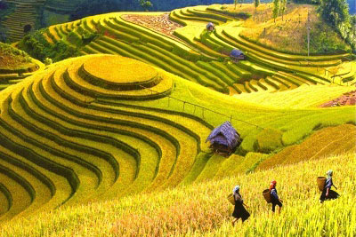 Sapa easy Trekking 2 Days - 3 Nights (Overnight in Hotel)